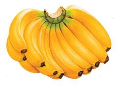 Bananas-frescas