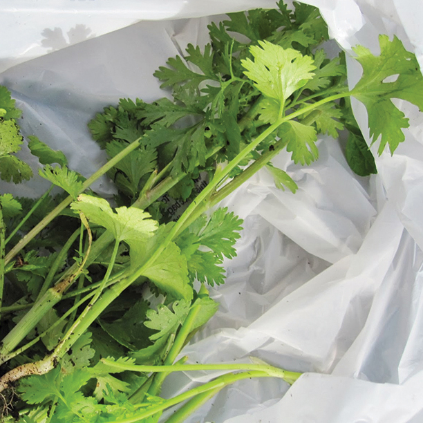 Como-conservar-las--hierbas-frescas