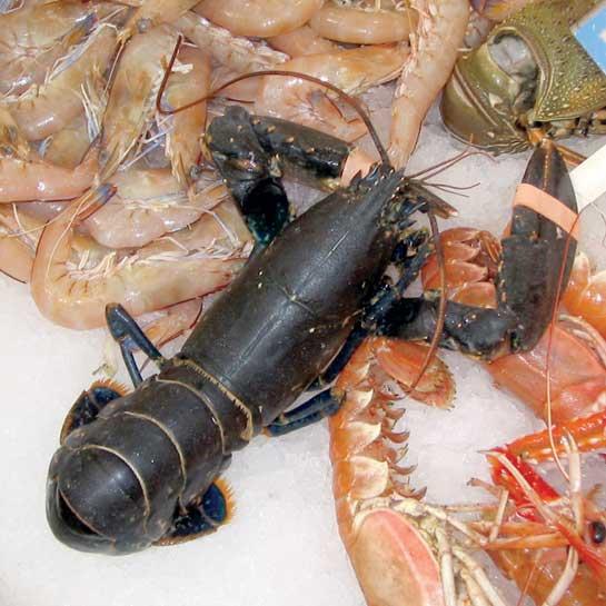 Pescados-y-mariscos-deliciosos
